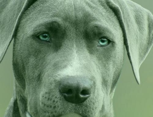 Foods that Promote Pet Eye Health
